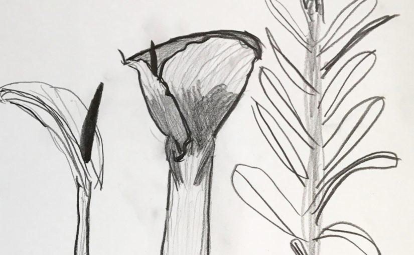 Kunst 4: Studie van bloemen